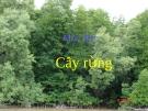 Bài giảng môn thực vật rừng: Cây Rừng