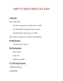 Giáo án Sinh học lớp 9 : Tên bài dạy : ADN VÀ BẢN CHẤT CỦA GEN