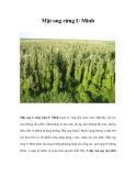 Mật ong rừng U Minh