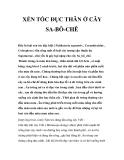 XÉN TÓC ĐỤC THÂN Ở CÂY SA-BÔ-CHÊ