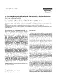 "Báo cáo khoa học: ""In vivo morphological and antigenic characteristics of Photobacterium damselae subsp. piscicida"""