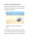 Bãi biển – nguồn đề tài không giới hạn