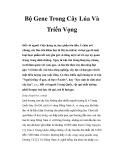 Bộ Gene Trong Cây Lúa Và Triển Vọng
