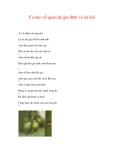 CA DAO VỀ CÁC ĐỊA DANH - TỈNH THÀNH PHỐ - 9