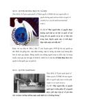 SỐ 29 - QUYỀN HƯỞNG TRẬT TỰ XÃ HỘI