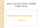 """Báo cáo cây nông nghiệp ngắn ngày """" SÂU BỆNH TRÊN CÂY ĐẬU XANH """""""
