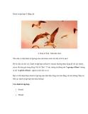 Danh từ tập hợp về động vật
