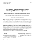 """Báo cáo khoa học: """"Effect of fungal infection on leaf gas-exchange and chlorophyll fluorescence in Quercus ilex"""""""
