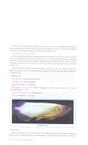 Kỹ thuật nuôi cá rồng part 3