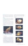 Kỹ thuật nuôi cá rồng part 4