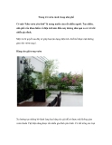 Trang trí vườn cảnh cho nhà phố