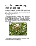 Cúc tần: Bài thuốc hay, món ăn hấp dẫn