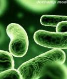 Sinh trưởng, phát triển của vi khuẩn trong điều kiện nuối cấy tĩnh