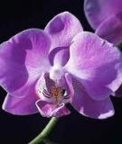 . Vài nét về nguồn gốc và sự tiến hóa của ngành Ngọc lan