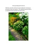 Cách tạo góc lãng mạn cho nhà vườn