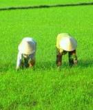 Bảo vệ cây trồng