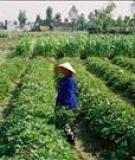 Sâu mọt hại nông sản