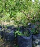 Các phương pháp xác định lượng nước cần của cây trồng