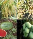 Kết quả nghiên cứu ảnh hưởng của một số biện pháp có tác dụng tiết kiệm lượng nước tưới cho cây bông
