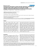 """Báo cáo y học: """"Octacalcium phosphate crystals directly stimulate expression of inducible nitric oxide synthase through p38 and JNK mitogen-activated protein kinases in articular chondrocytes"""""""