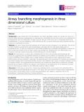 """Báo cáo y học: """" Airway branching morphogenesis in three dimensional culture"""""""