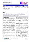 """Báo cáo y học: """"The role of pleiotrophin and β-catenin in fetal lung development"""""""