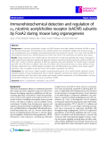 """Báo cáo y học: """" Immunohistochemical detection and regulation of a5 nicotinic acetylcholine receptor (nAChR) subunits by FoxA2 during mouse lung organogenesis"""""""