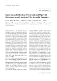 """Báo cáo khoa học: """"Experimental Infection of Conventional Pigs with Streptococcus suis serotype 2 by Aerosolic Exposure"""""""