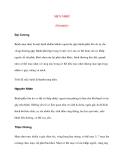 Bệnh Học Thực Hành: MỤN NHỌT (Furuncle)