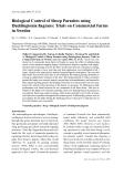 """Báo cáo khoa học: """"Biological Control of Sheep Parasites using Duddingtonia"""""""