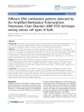 """Báo cáo thú y: """" DNA methylation patterns detected by the Amplified Methylation Polymorphism Polymerase Chain Reaction (AMP PCR) technique among various cell types of bulls"""""""