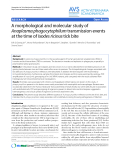 "Báo cáo khoa học: "" A morphological and molecular study of Anaplasma phagocytophilum transmission events at the time of Ixodes ricinus tick bite"""