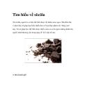 Tìm hiểu về sôcôla