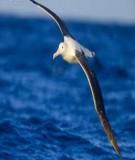 Cở sở phương pháp mô hình hóa trong hải dương học chương 5 - Đinh Văn Ưu