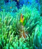 Cở sở phương pháp mô hình hóa trong hải dương học chương 2- Đinh Văn Ưu