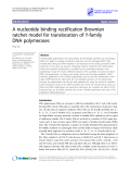 """Báo cáo y học: """" A nucleotide binding rectification Brownian ratchet model for translocation of Y-family DNA polymerases Ping Xie"""""""