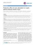 """Báo cáo y học: """"Protective effect of resin adsorption on septic plasma-induced tubular injury"""""""