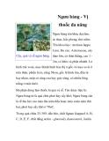 Ngưu bàng - Vị thuốc đa năng