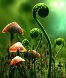 Chất điều hòa sinh trưởng thực vật là gì và được sử dụng trong nông nghiệp với các mục đích gì ?