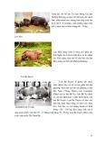 GIÁO TRÌNH GIỐNG VẬT NUÔI part 2