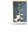 Nghệ thuật làm hoa giấy part 8