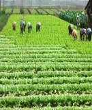 Giáo trình về Kinh tế nông nghiệp