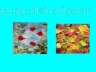 Giáo trình điện tử mầm non: Thế giới thực vật