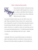 Polime và những ứng dụng của polime