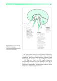 ESSENTIAL NEUROLOGY - PART 3