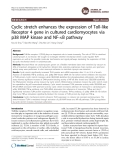 Cyclic stretch enhances the expression of Toll-like Receptor 4 gene in cultured cardiomyocytes via p38 MAP kinase and NF-B pathway