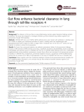 "Báo cáo y học: "" Gut flora enhance bacterial clearance in lung through toll-like receptors 4"""