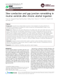 """Báo cáo y học: """"Slow conduction and gap junction remodeling in murine ventricle after chronic alcohol ingestion"""""""