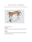 Động cơ xăng cơ bản (phần 3) - Cơ cấu phát lực (tiếp)