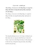 Cây óc chó – vị thuốc quý